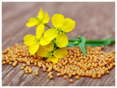 Massive production of mustard seeds leads to an increase in palm oil imports