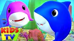 Nursery Rhymes in English: Children Video Song in English 'Laughing Shark - Baby Shark'