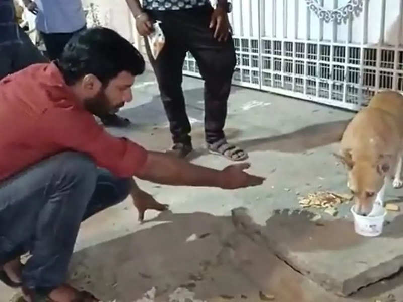Vishal feeds a stray dog and a puppy on the roads