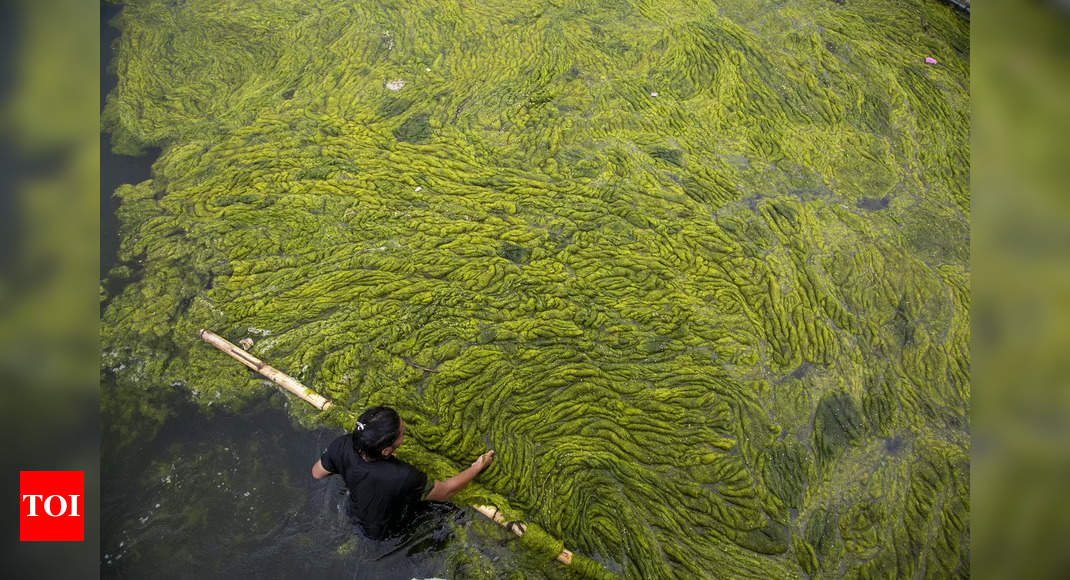 Study: Climate change could impact algae in global ocean – Times of India