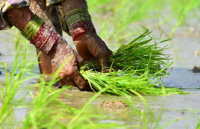 Rice with zinc, wheat with protein to fight malnutrition