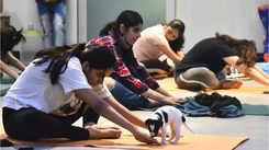 How about doing yoga amidst puppies? Here comes pawga!