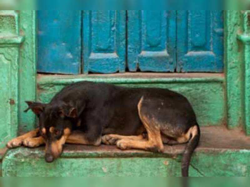 The story of a gentleman and a stray dog (Thinkstock photos/Getty Images)