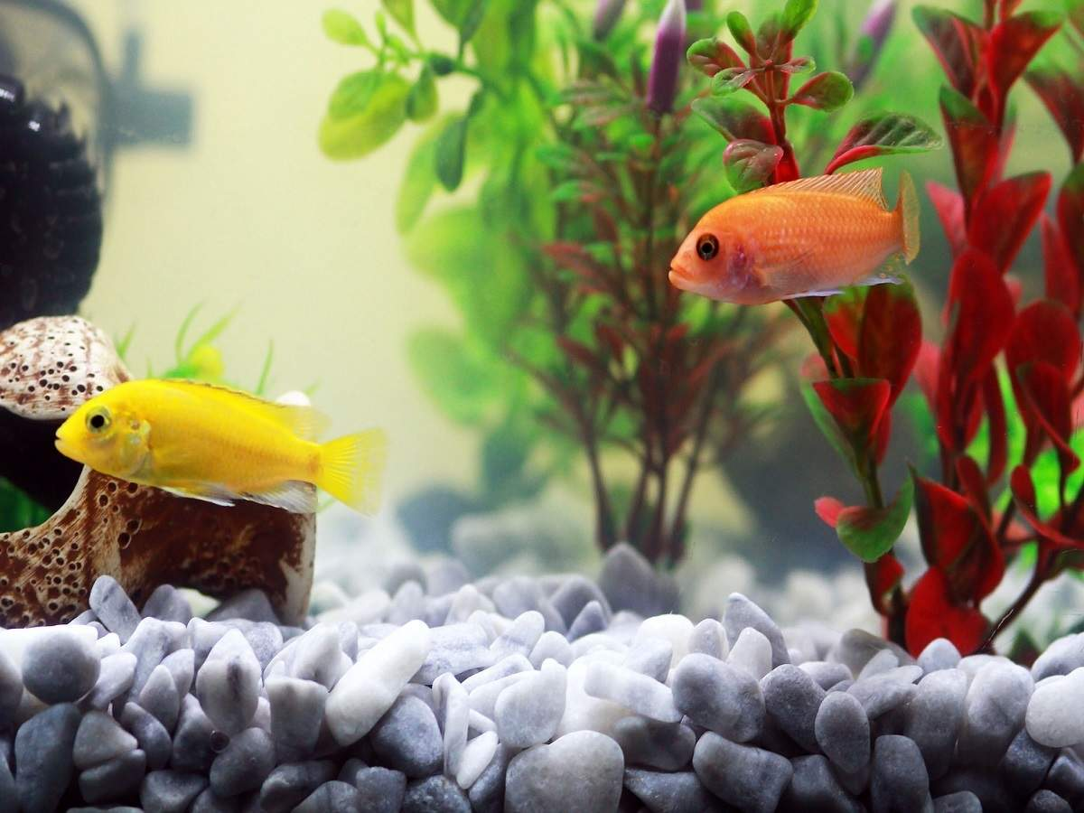 Artificial Aquarium Plants That Will Make Your Fish Tank Look Beautiful Most Searched Products Times Of India