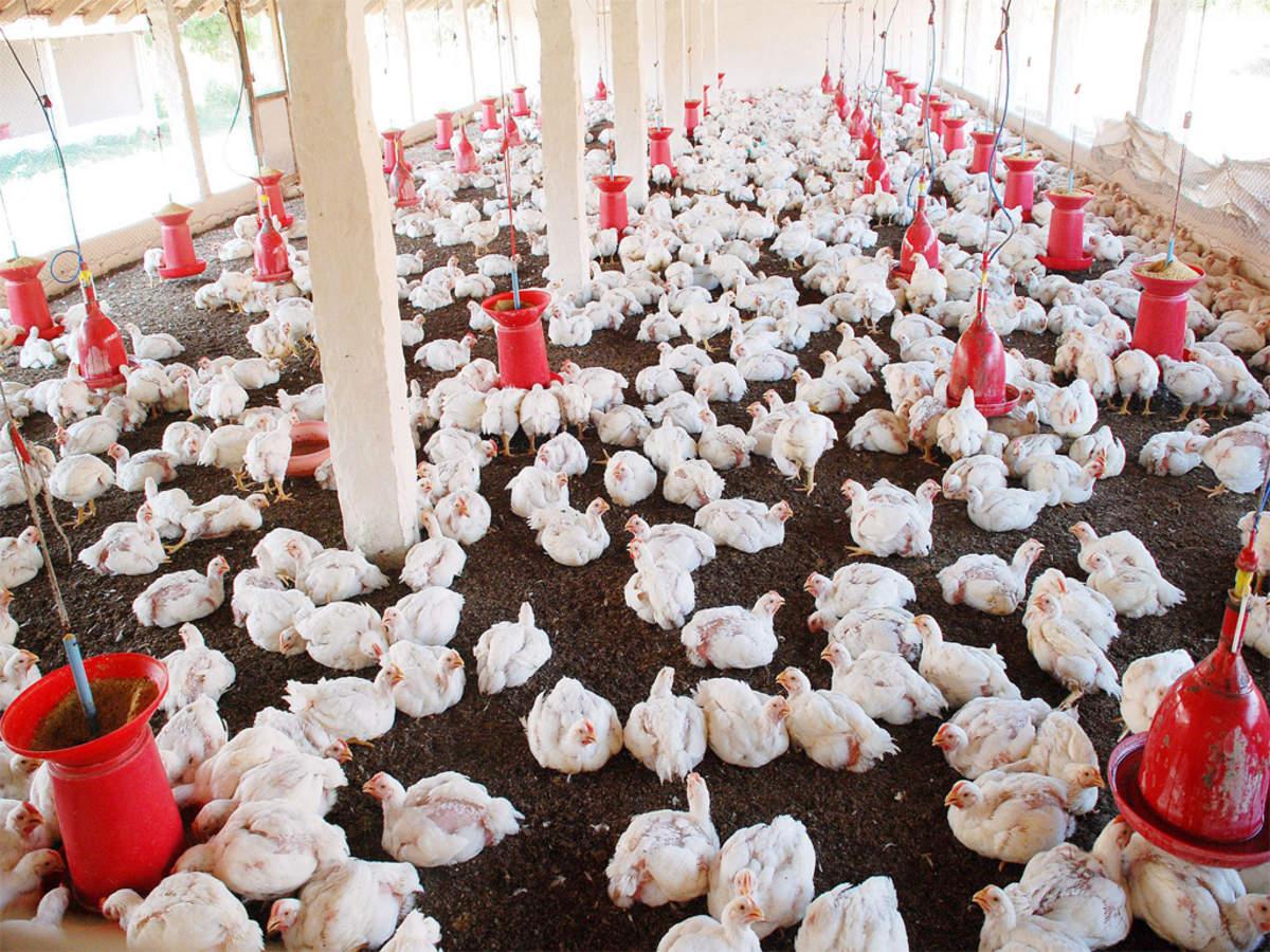 farmers: Farmers learn poultry farming techniques | Nagpur News