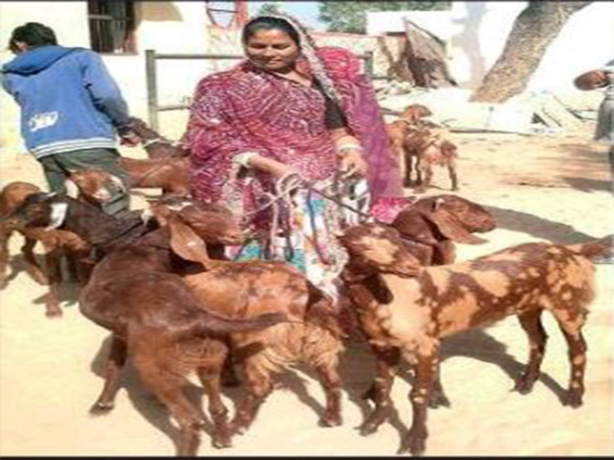 Rural women to produce goat milk under new govt scheme | Jaipur News