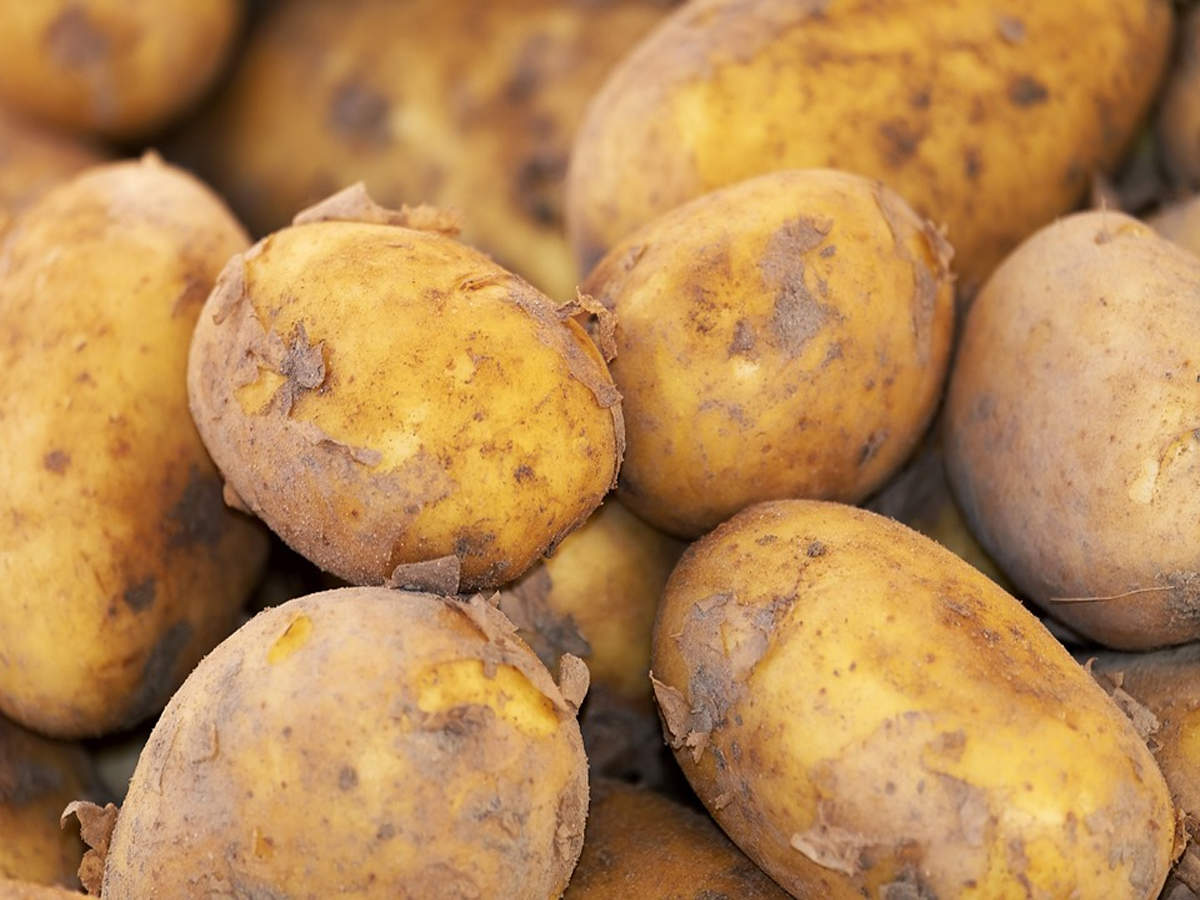 Situation grim for potato growers: Situation grim for potato growers