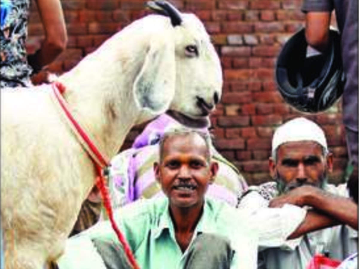 Goats, buffaloes for Rs 1 lakh each: Noida traders rake in profits