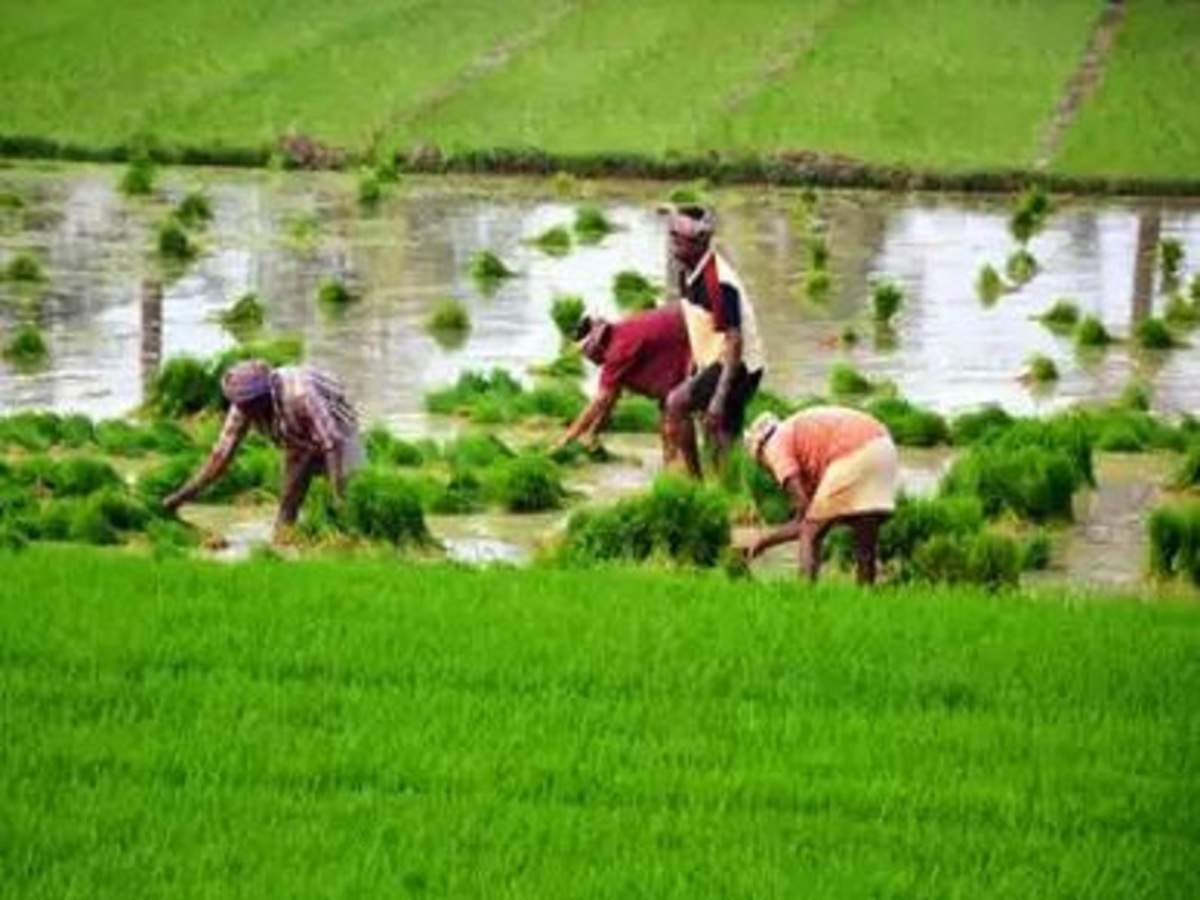 Madhya Pradesh government asks Essar to pay Rs 50 lakh for crop loss