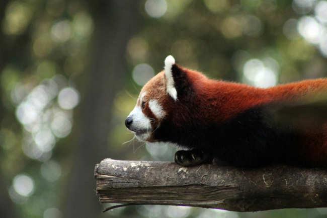Darjeeling Zoological Park