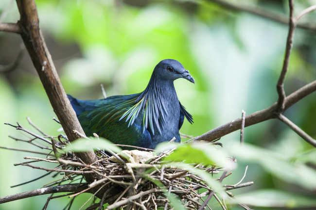 A birdwatcher's paradise