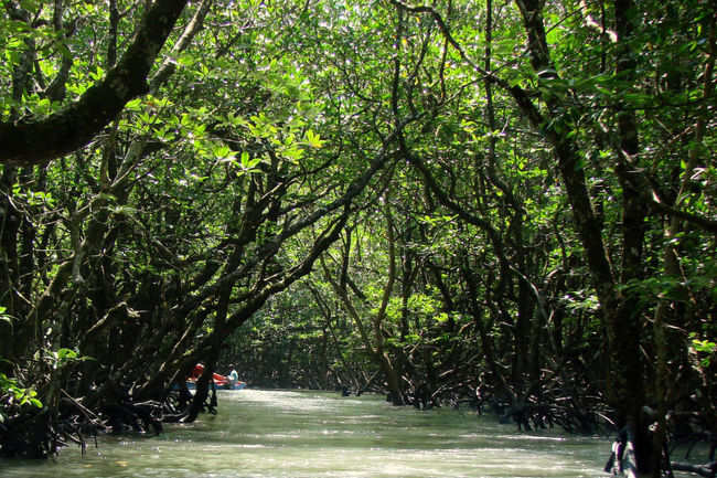 Sail through the mangrove creek