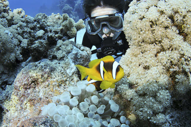 Scuba diving in the Andaman Islands