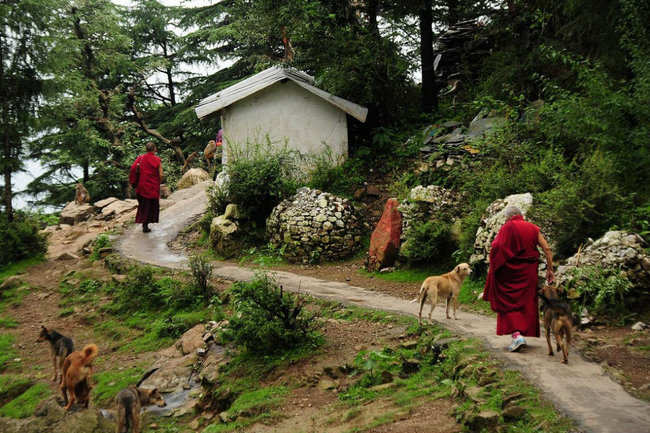 Nature walks in Dharamshala