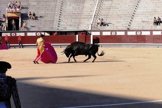 Bullfights at Plaza de Toros Las Ventas