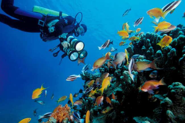 Underwater diving in Aqaba