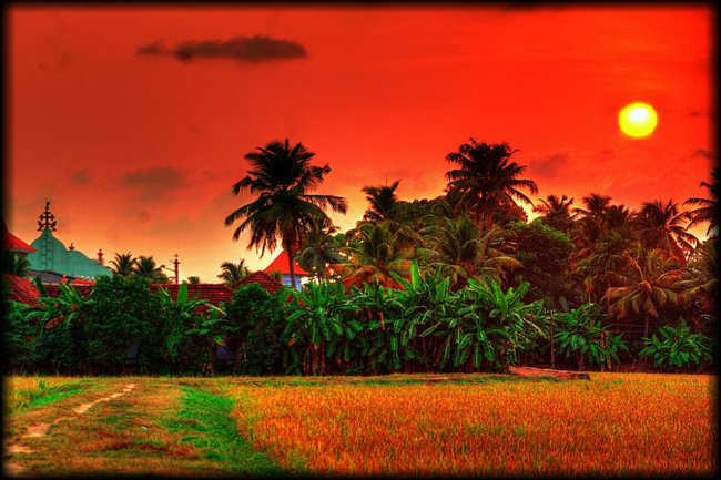 Kuttanad rice fields