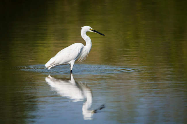Birdwatching in Alleppey