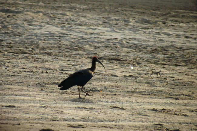 The Wetlands of Chambal