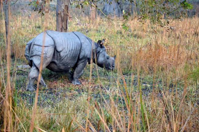 Dudhwa National Park - 10 must-visit national parks in India for ...
