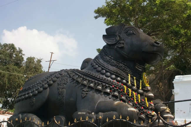 Here sits the poised Nandi