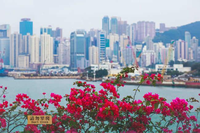 Best spots to get Hong Kong city views
