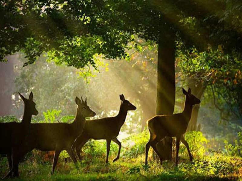 Top 10 Wildlife Sanctuaries In Odisha | Wildlife In Odisha | Times of