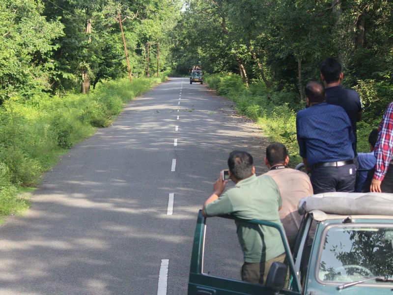 Coronavirus India: Jim Corbett, Rajaji National Park prohibit all tourist activities till March 31, Uttarakhand