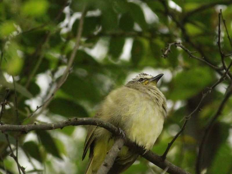 Rare Himalayan bird shows up in Bhondsi Nature Park near Delhi